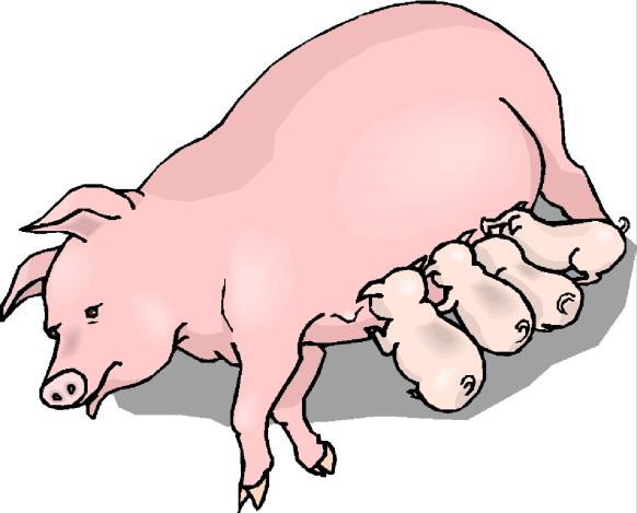 582x469 Pig Clip Art 3 Clipartcow