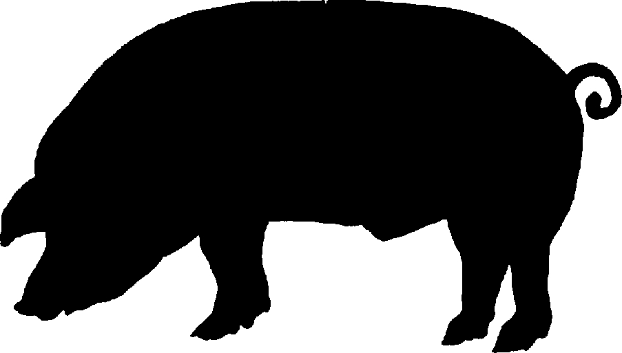 903x513 Free Clip Art Of Pig Clipart Black And White