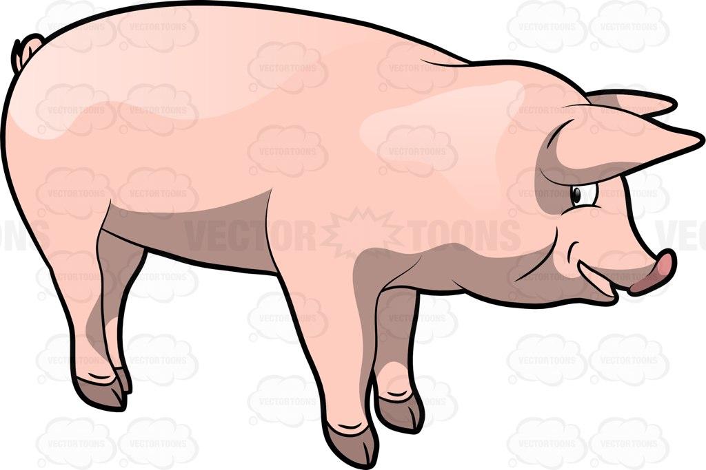 1024x683 Porky Clipart