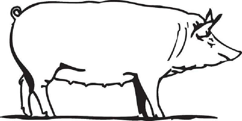 800x402 Outline, Drawing, Barn, Farm, Pig, Art, Animal