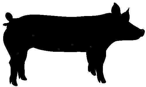 508x304 Pig Clipart Hampshire