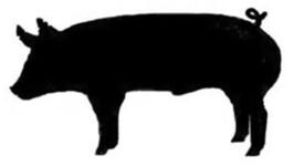 265x150 Show Swine Clipart