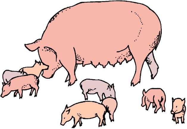 628x434 Pig Clipart Piglet
