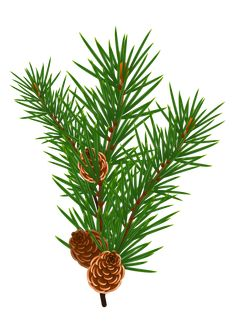 235x333 Pine Tree Clip Art Trees Pine Tree, Clip Art And Pine