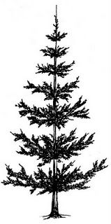 Pine Tree Black And White | Free download on ClipArtMag
