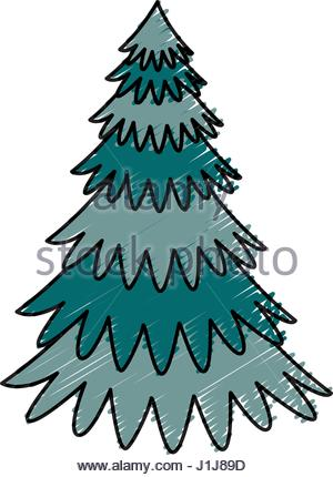 300x430 Cartoon Pine Tree Natural Plant Conifer Image Stock Vector Art