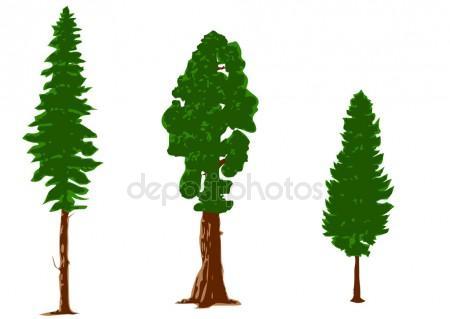 450x319 Pine Tree Silhouette Stock Vectors, Royalty Free Pine Tree