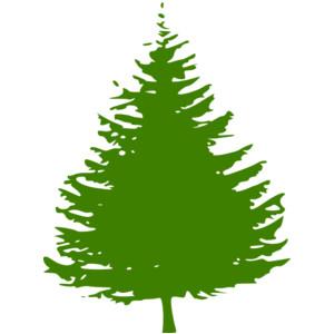 300x300 Pine Tree Clipart