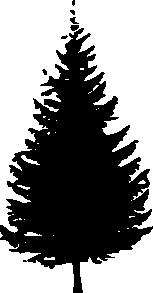 153x293 Pine Tree Clipart Douglas Fir
