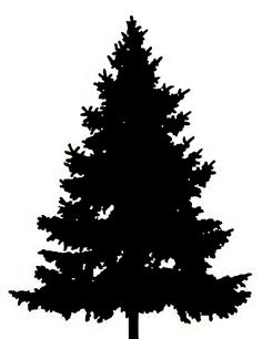 236x306 Pine January Clipart, Explore Pictures