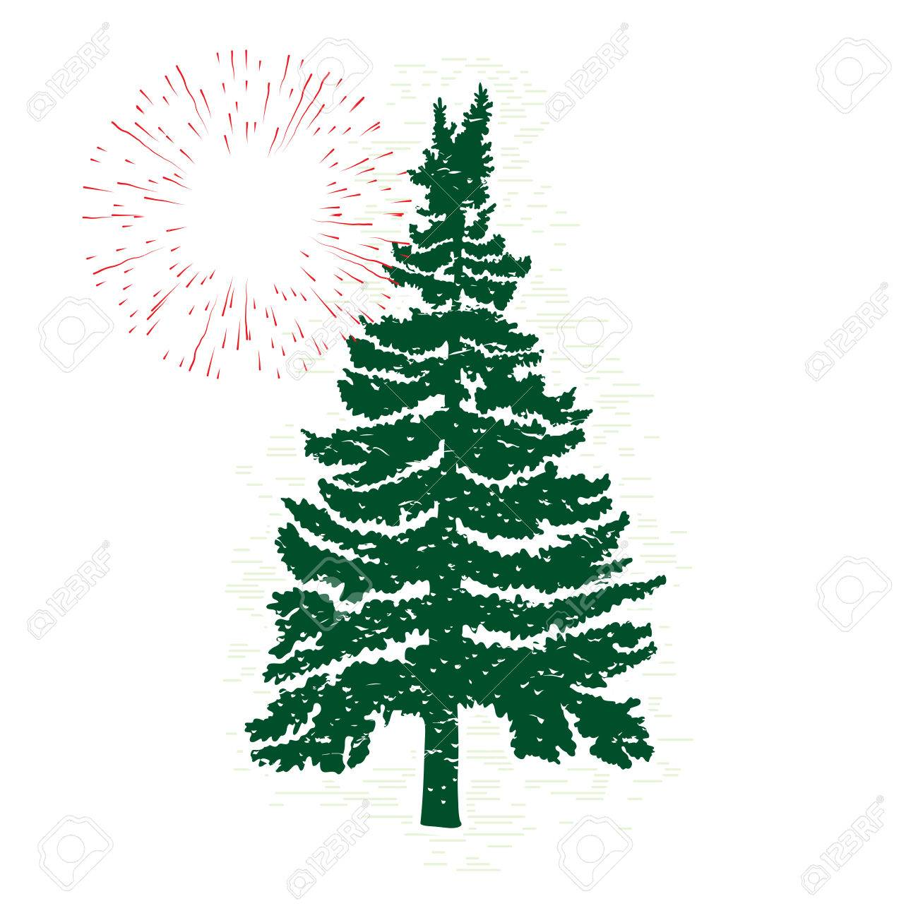 1300x1300 Vector Evergreen Silhouette Of Pine And Fir Tree, Conifer Tree