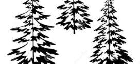 272x125 Best Pine Tree Silhouette Ideas On Forest On Fir