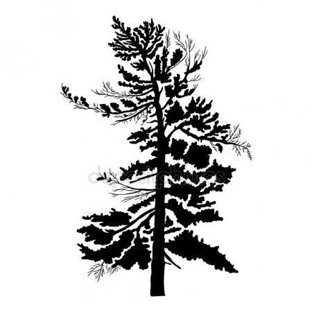 450x450 Cedar Tree Silhouette Stock Photos, Royalty Free Cedar Tree