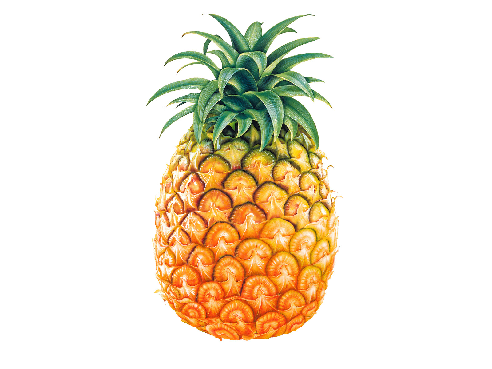 1600x1200 pineapple clip art free clipart black white