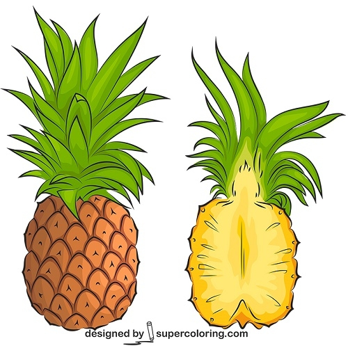 500x500 Pineapple Cut Into Pieces Vector Super Coloring