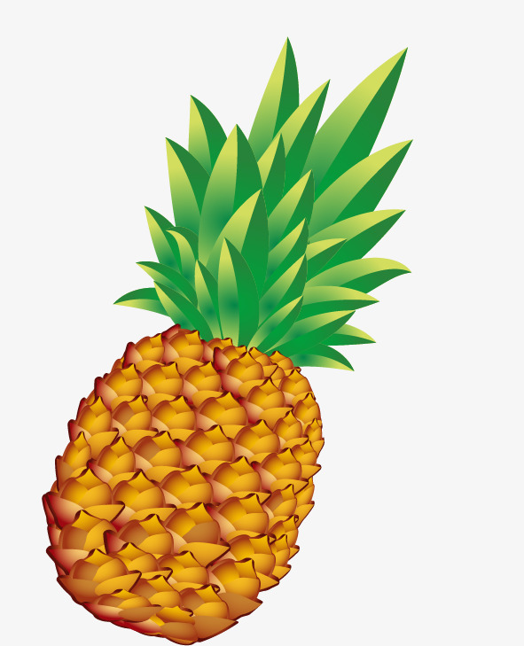 591x729 Pineapple Free Stock Buckle, Pineapple, Fruit Pineapple, Vector