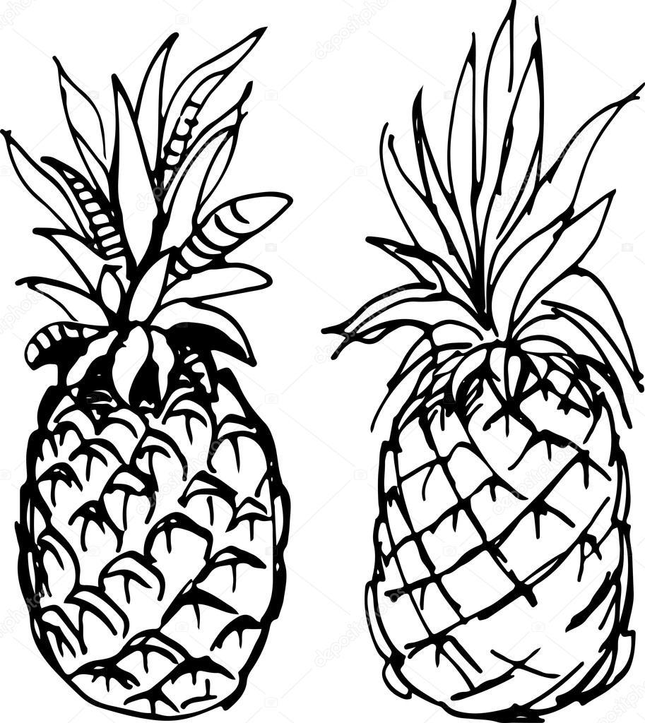 913x1024 Pineapple. Vector Illustration. Stock Vector Ledav