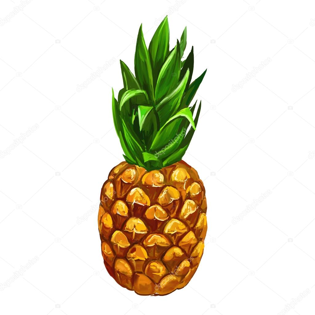 1024x1024 Fruit Pineapple Vector Illustration Hand Drawn Painted Stock