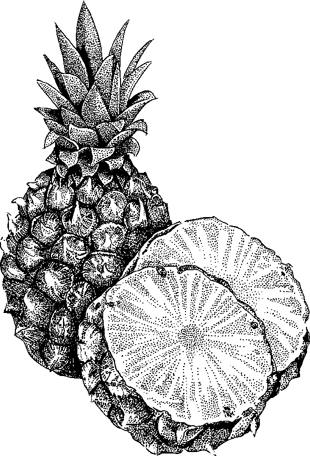 625x918 Pineapple Black And White Pineapple Clipart Black And White Free 7