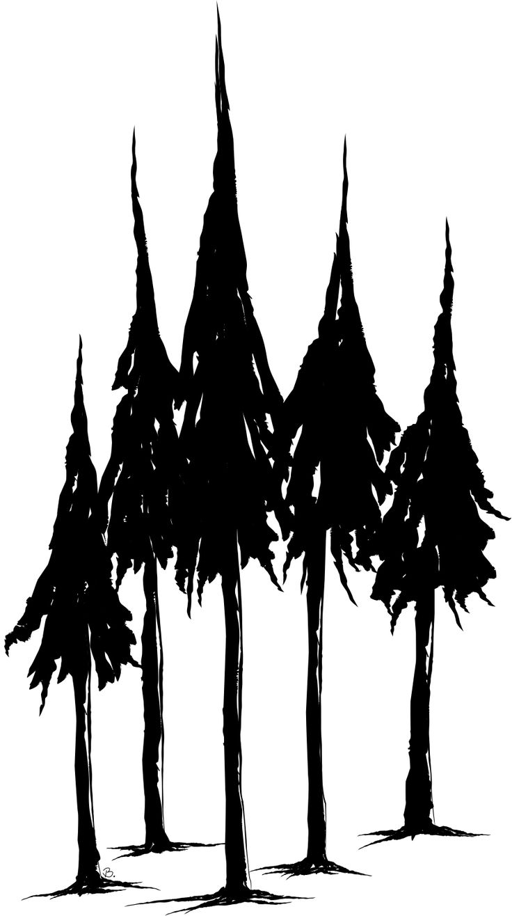 736x1316 Pine Tree Line Drawing Best Ideas About Pine Tree Silhouette