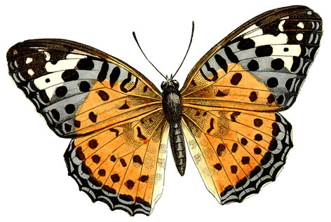 472x317 Butterfly Graphics Clipart