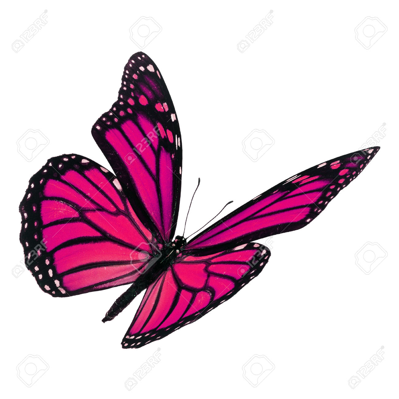 1300x1300 Monarch Butterfly Clipart Pink