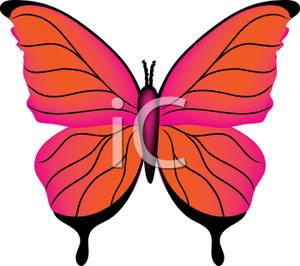300x266 Orange And Pink Butterfly