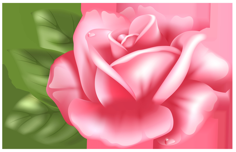 6000x3868 Top 81 Pink Rose Clip Art