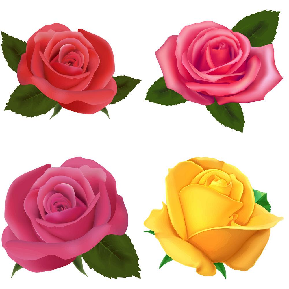 1000x1000 Red Rose Clipart Pink Rose