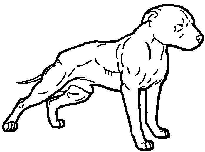 698x516 Pitbull Clipart Drawn
