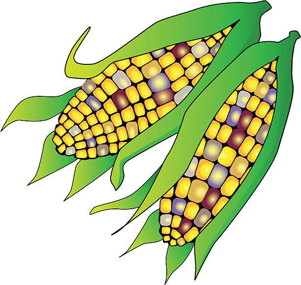 612x580 Corn Clipart Maize