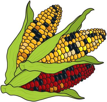 369x352 Corn Clipart Page 1