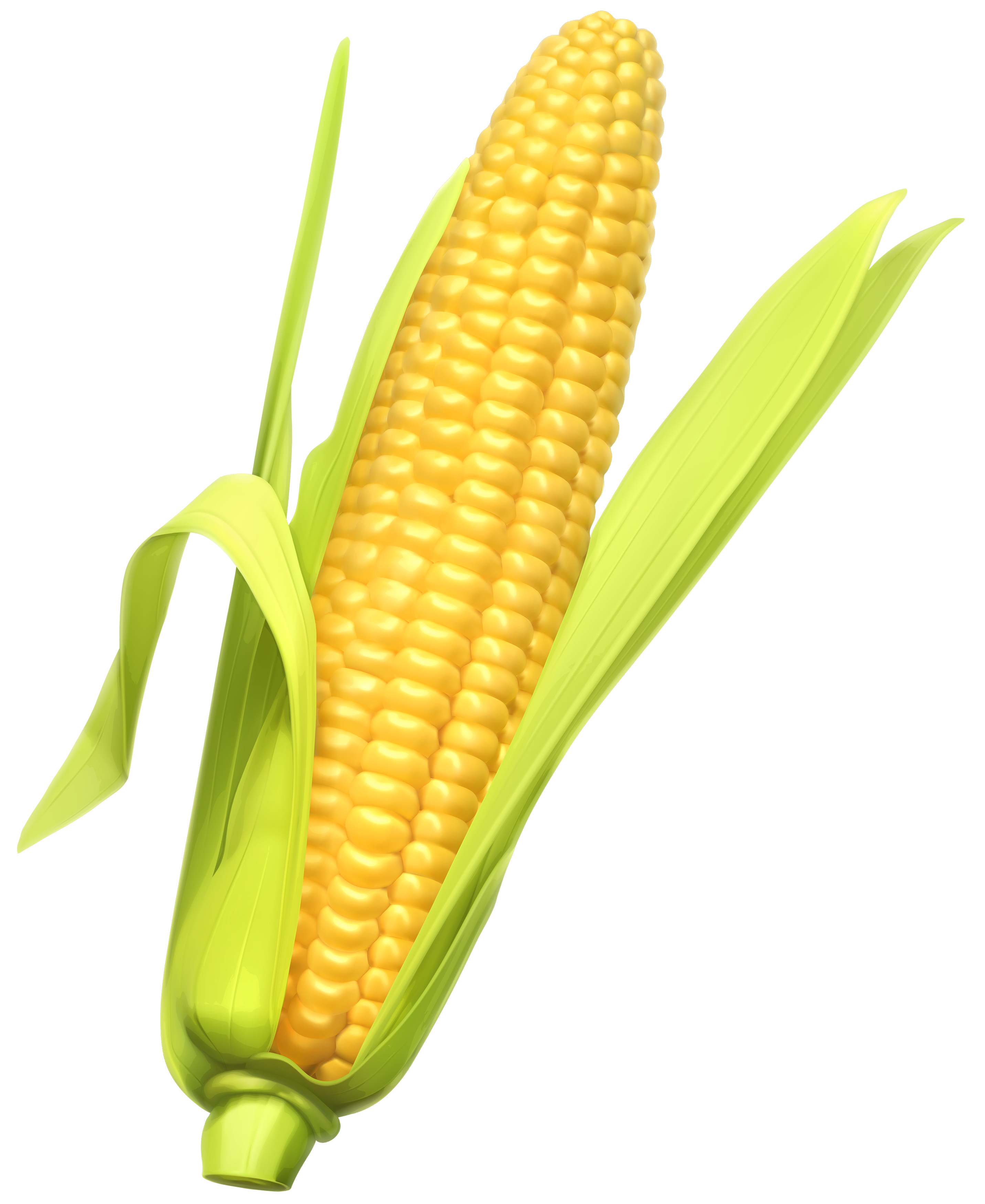 2863x3500 Corn Clipart Web Clipart