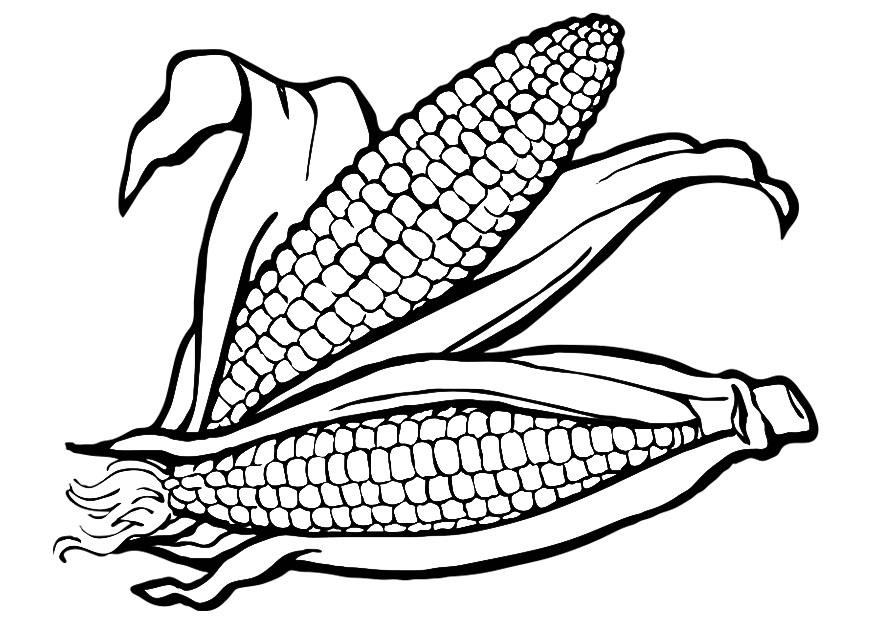 875x620 Indian Corn Coloring Page 430330
