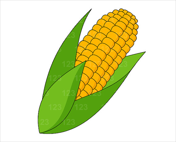 570x462 Free Corn Clipart
