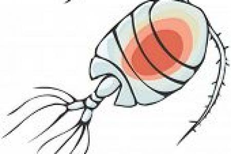 450x300 Phytoplankton Clip Art