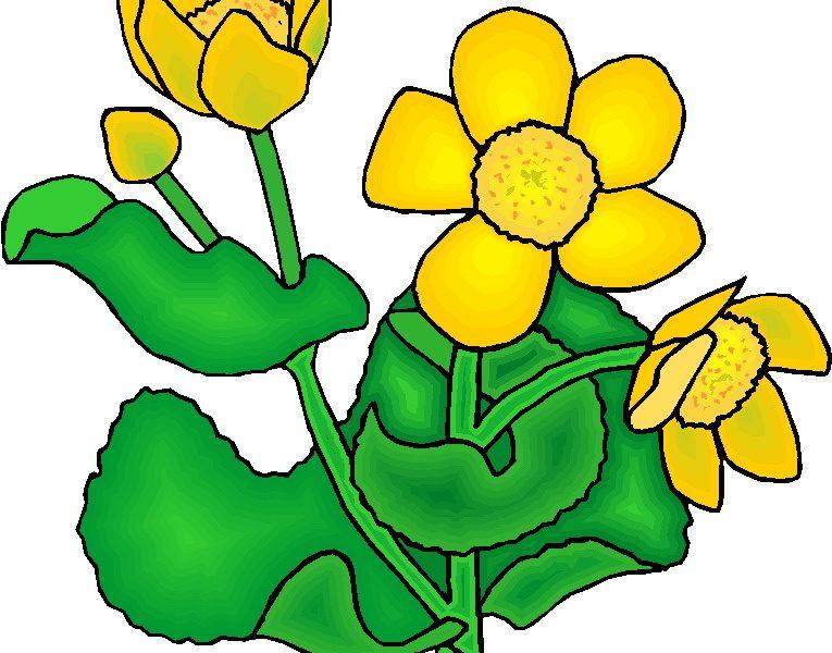 765x600 Plant Clip Art