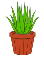 150x195 Plant Clipart Amp Look At Plant Clip Art Images