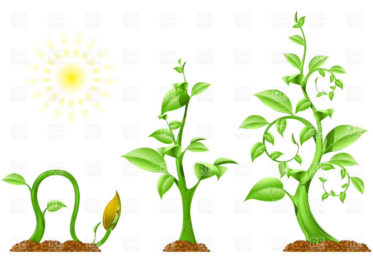1200x843 Plant Growth Royalty Free Vector Clip Art Image