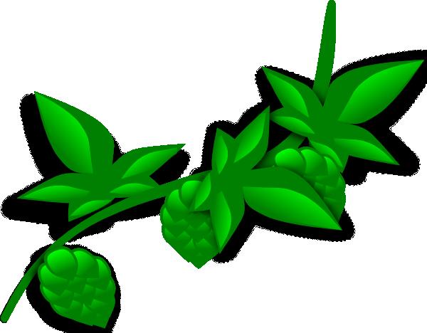 600x468 Hops Plant Clip Art Free Vector 4vector