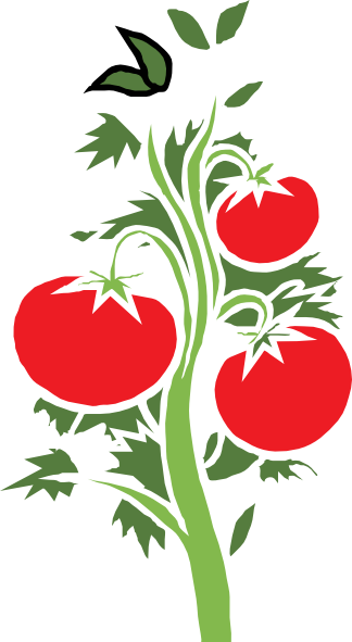 324x591 Tomato Clipart Tomato Tree