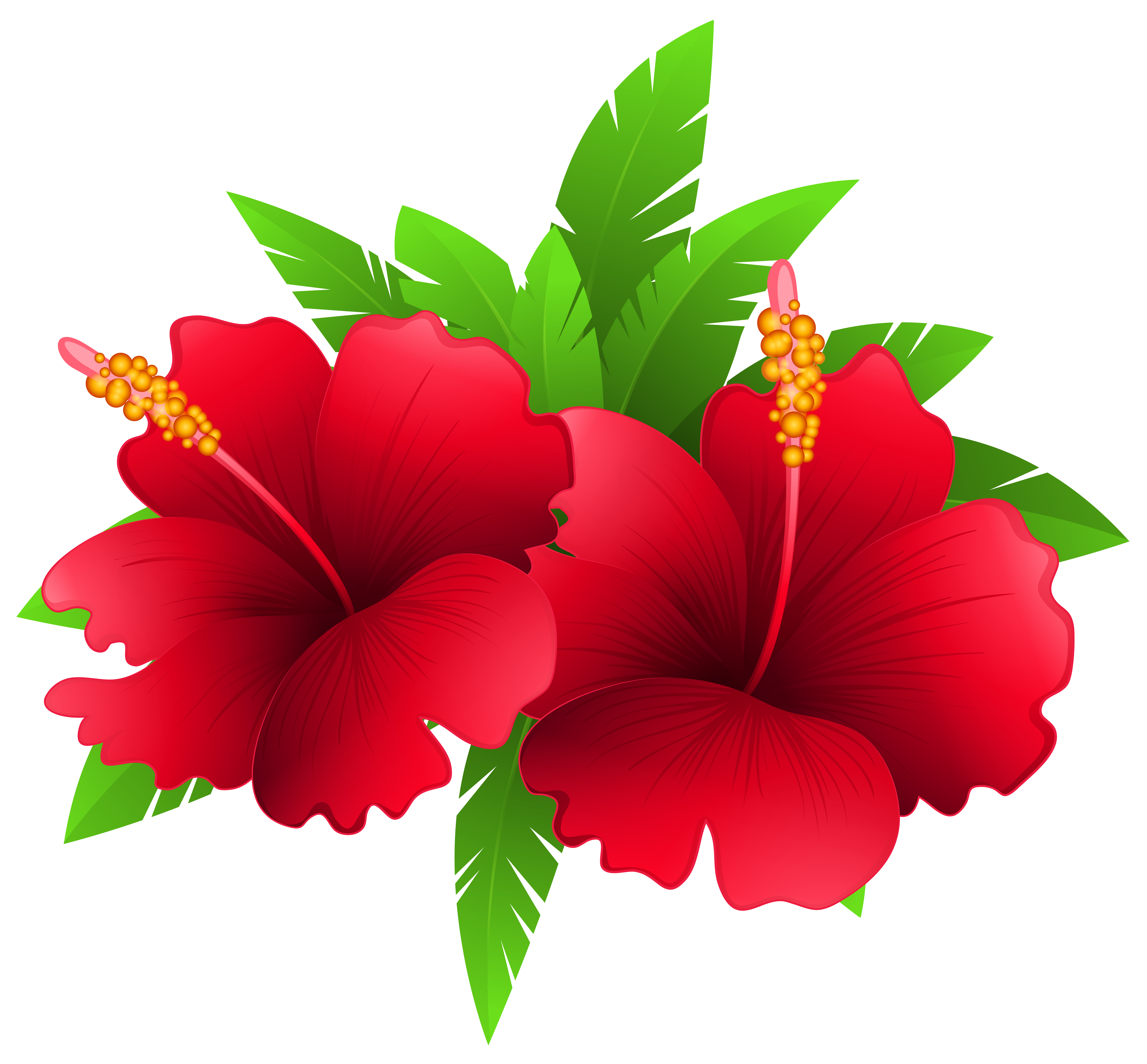 6283x5825 Exotic Flowers And Plant Png Clipart Imageu200b Gallery Yopriceville
