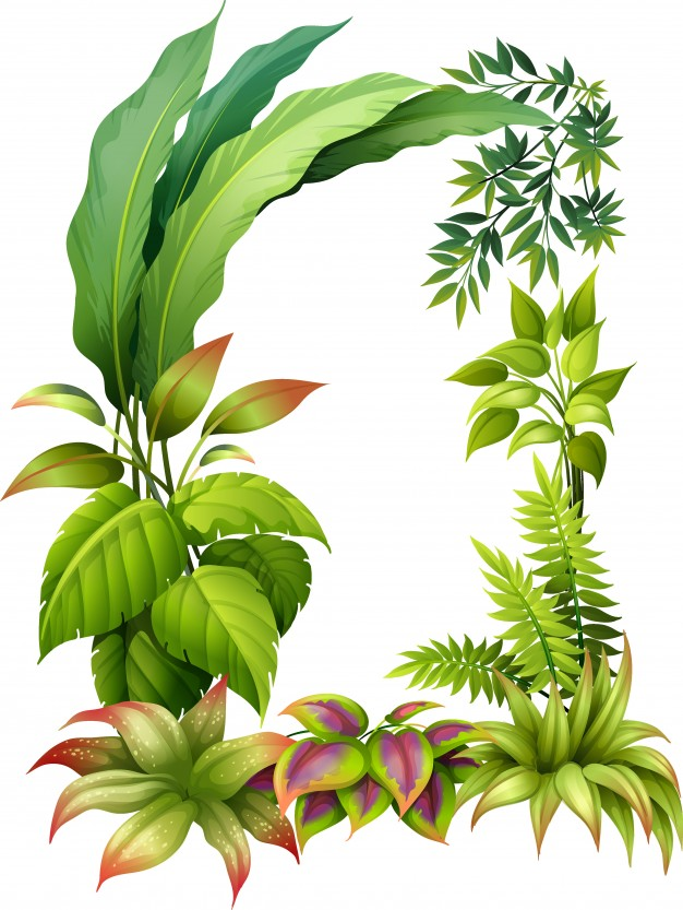 626x833 Leafy Plants Vector Free Download