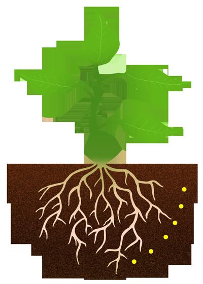400x560 Plant Roots Clipart