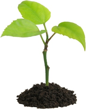 288x368 Trees And Plants Images Free Stock Photos Download (18,283 Free