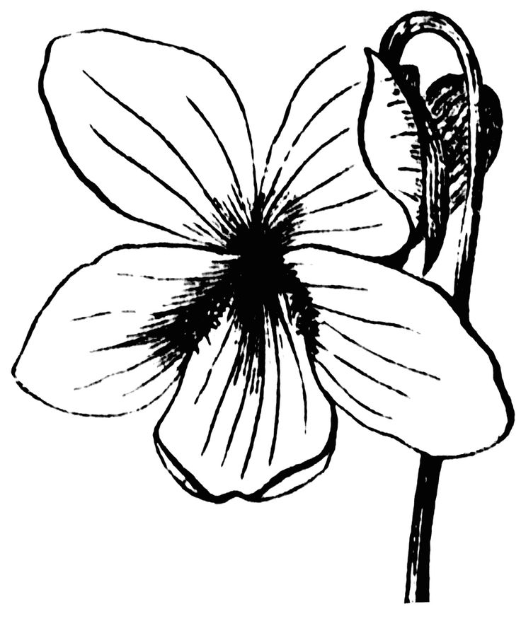 Plants Clipart Black And White