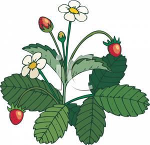 300x290 Flower Plants Clipart