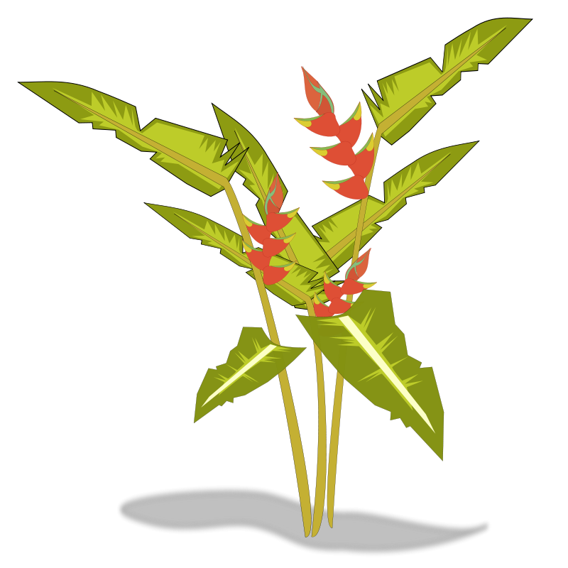 800x800 Free Heliconia Clip Art