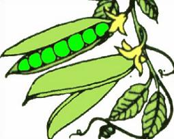 255x203 Free Pea Plant Clipart