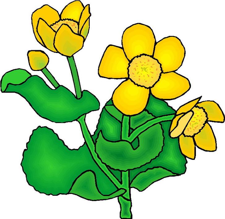 727x707 Plant Clip Art Images